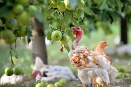 Ez a hétvége legyen az anyáké - és a legjobb rántott csirkéé